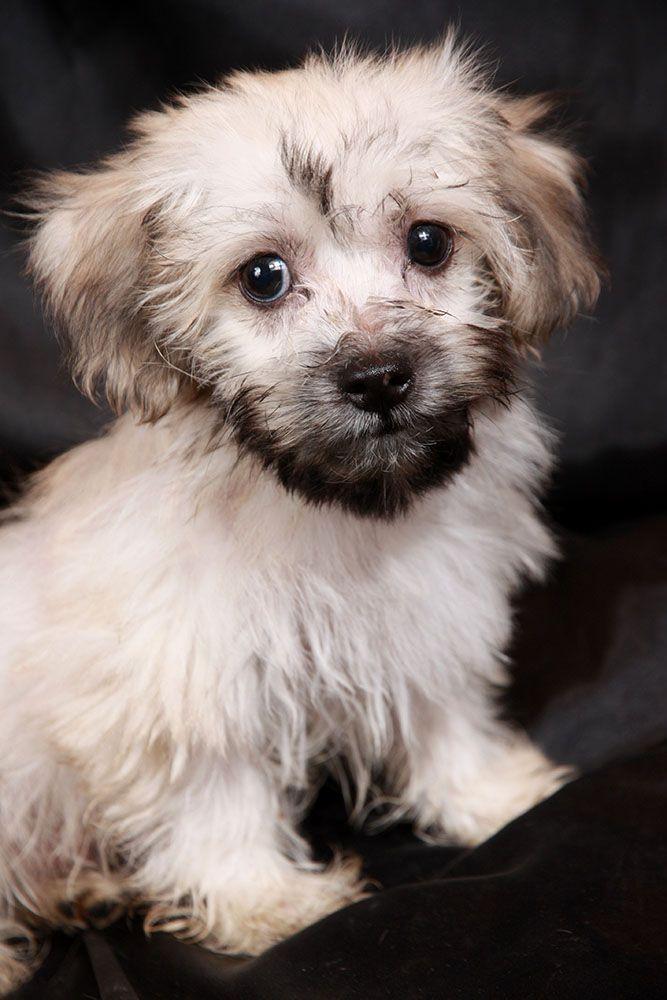 Diana S Grove Dog Rescue Cabool Mo