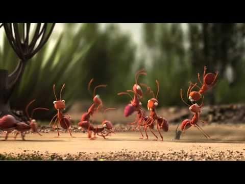 De Lijn - Mieren