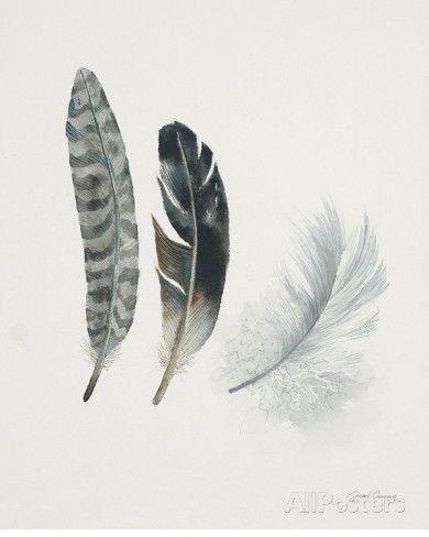 Field Study Feather Trio Prints by Jurgen Gottschlag at AllPosters.com