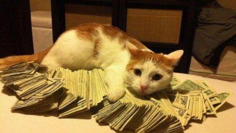 Коты-аристократы: вдова из Нью-Йорка оставила своим питомцам наследство в $300 тысяч
