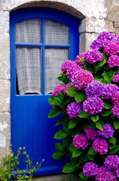 Do you have favorite things that make you feel rested? Hydrangea seem to do it for me...even a photo.
