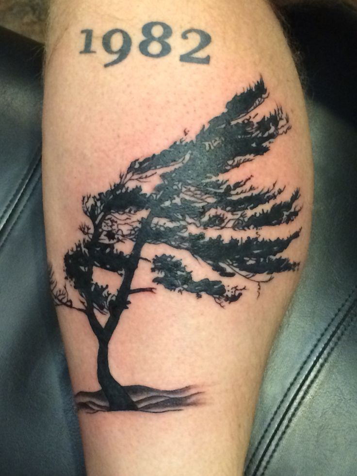 wind swept tree by gauge my tattoos pinterest trees. Black Bedroom Furniture Sets. Home Design Ideas