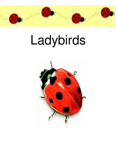 Ladybird Facts Powerpoint