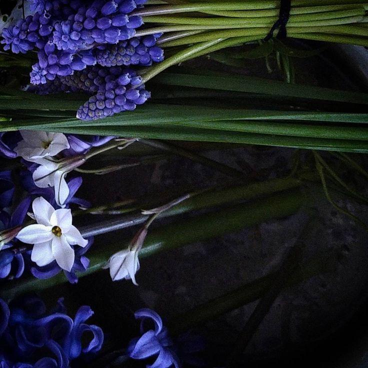 Thank you for always seeing my post. Have a happy new year !  明日で2016年が終わります。来年も、季節を感じられる草花をpostして参りますのでよろしくお願い致します。私にとって皆様にご覧いただける事が、どれほどの糧になっているかしれません…、ありがとうございました! よいお年をお迎え下さいませ。  garden & wildflowers  青木 優子  #ムスカリ #ハナニラ #ヒヤシンス #球根植物 #フラワーアレンジメント #花のある暮らし #花 #花材 #庭の花 #muscari  #ipheionuniflorum #hyacinthusorientalis #bulbous #flowerarrengement #springflowers #flowerslovers #gardens #flowerstagram #instagardeners_feature #homegrownflowers  #mygarden