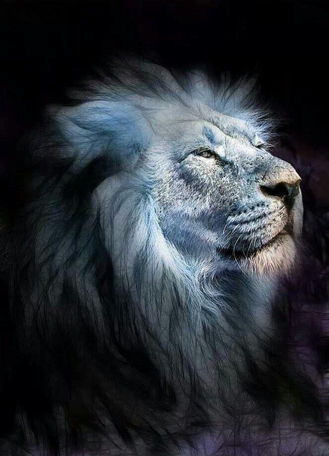 Голубой лев картинки