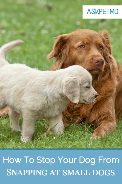 #QuickTip: How to help your oldest dog from snapping at the younger ones.