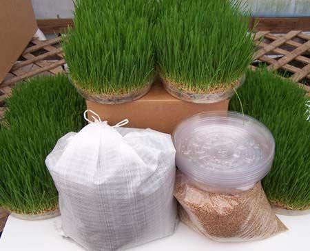Diy 10 Quot Round Floral Wheatgrass Centerpiece Grow Kit