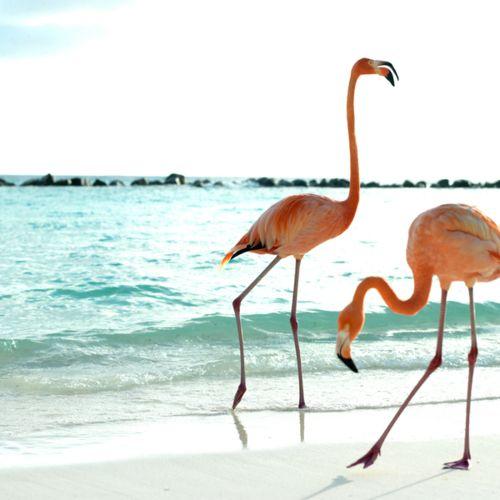 flamingos: Pink Summer, At The Beaches, Pink Flamingos, Beaches Time, Beaches Life, Color, Bridesmaid Dresses, Summer Lovin, Animal
