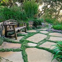 Thyme blurs the lines between patio pavers. These low-growing perennials include good choices for both sunny and shady locations, as well as options for light, moderate, and heavy traffic.