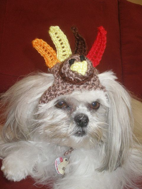Famous 23 best Thanksgiving Pets images on Pinterest | Funny animal, Pets  IX21