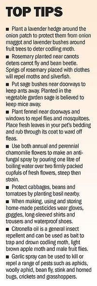 planting herbs and flowers for pests