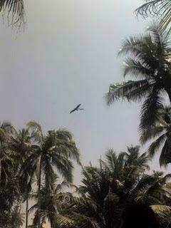 El gran ave: thunderbird, una foto tomada por un turista, fue llevada rapidamente a la prensa y publicada.