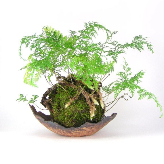 The 25+ Best Ideas About Pflanztöpfe On Pinterest | Pflanzentöpfe ... Bonsai Baum Dekoidee Indoor Garten