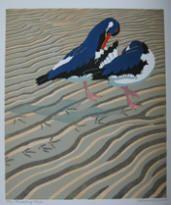 Preening Oystercatchers by Robert Gillmor
