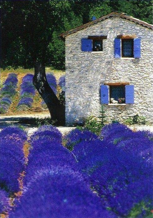 Lavender Fields in Provence, France - photo by Oliver Thirion: Photos, Flowers Fields, Lavender Fields, Color, Beautiful, Famous Artists, Places, House, Provence France