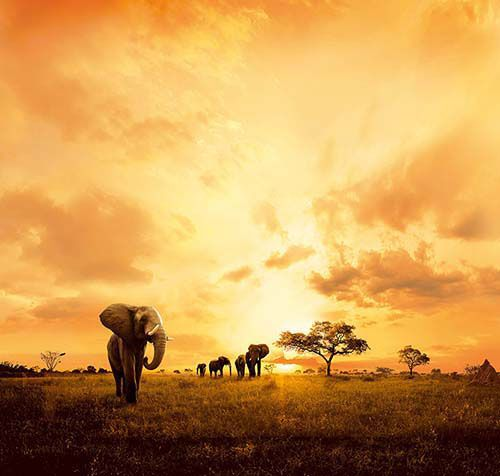 Amarula takes care of the environment through The Amarula Trust, which aims to leave a living legacy to future generations by preserving nature and wildlife. Read up more on The Amarula Trust here – http://www.amarula.com/trust#about-the-trust