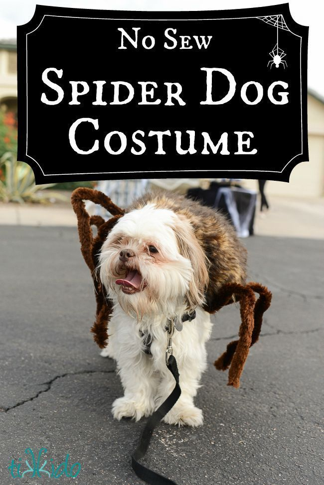 DIY Spider Dog Costume #catcostume #dogcostumes
