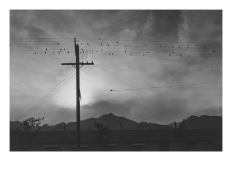 Birds on Wire, Evening Premium Poster by Ansel Adams at Art.com
