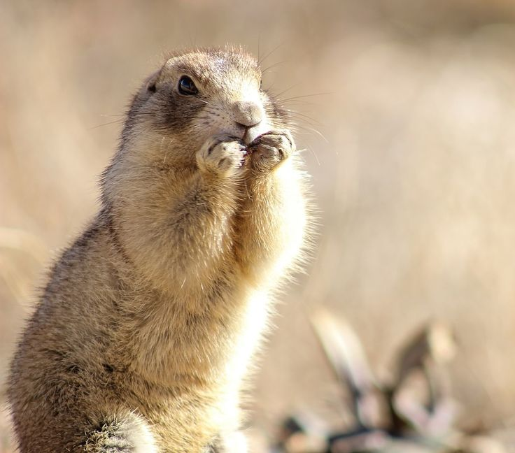 Pin by Rockey Albert on Animals Favorite Foods Wildlife