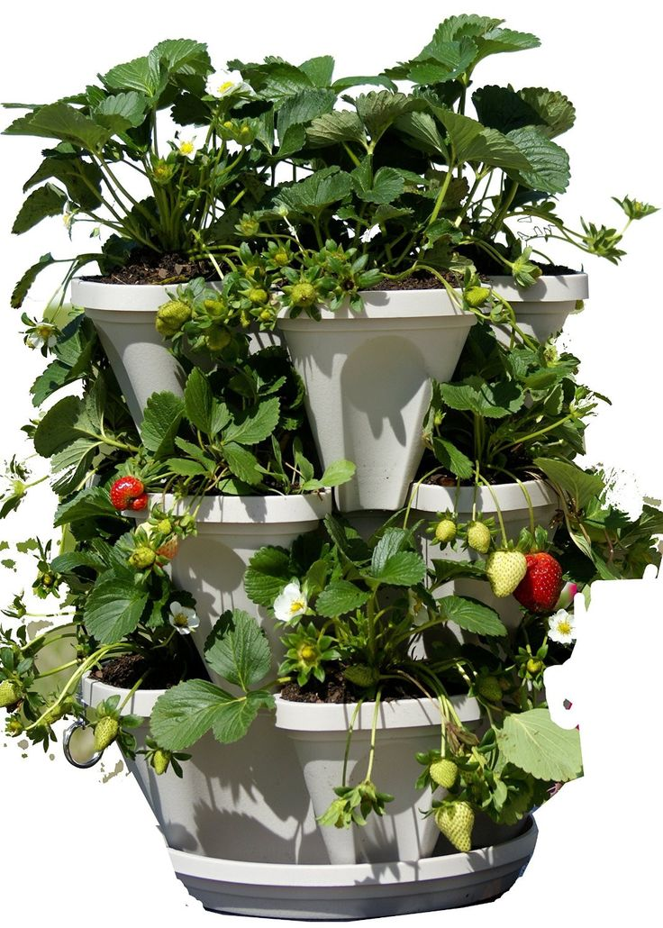 25 Best Ideas About Strawberry Planters On Pinterest