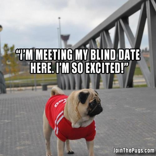 a pugs dating Free download hot date - spend a romantic night with a pink and charming pug, get to know each other and see how things turn out.