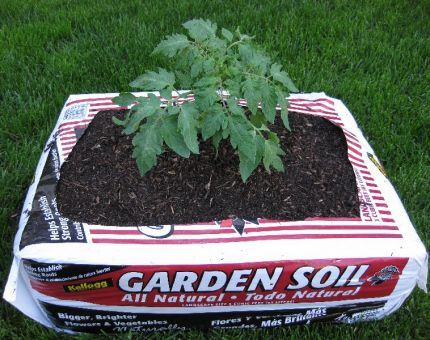 This is the coolest way to grow a garden when you don't have a way to till up the ground.  Organic top soil, here I come!