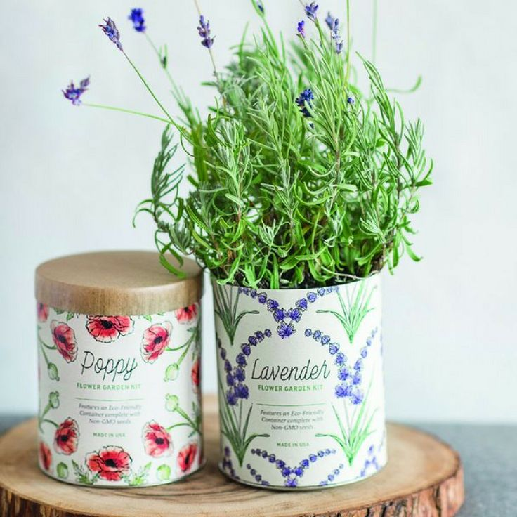 Indoor Grow Kit - Lavender