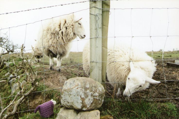 Older lamb curiously checking out a purple sheep of a different pedigree.  Found this in my boxes with older paper prints and scanned it.