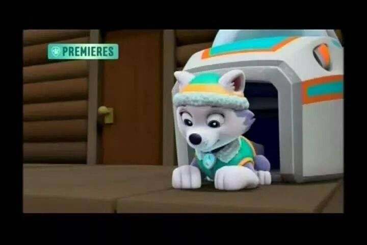 Everest new paw patrol pup patrol pup paw patrol new pup xander paw