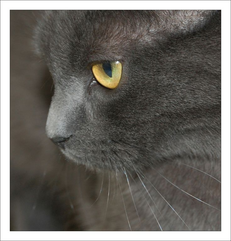 Mijn kater Pip Cat