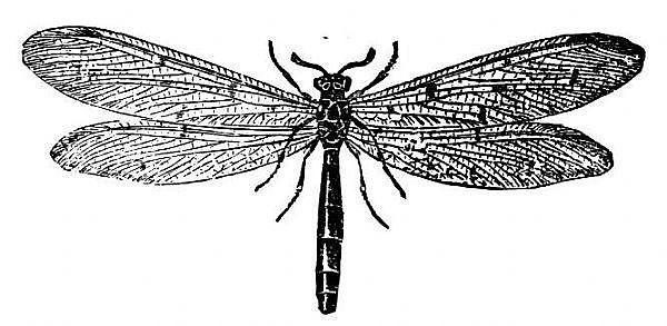 How to Make Termite Spray to Kill Termites