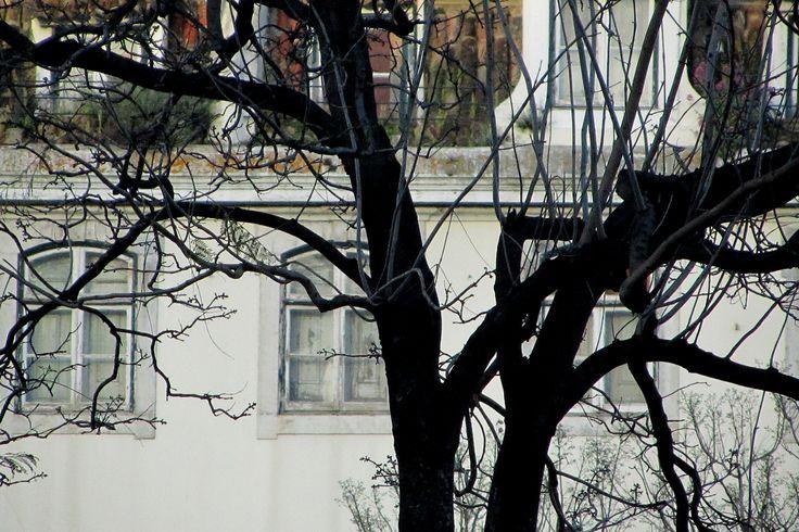 (Rossio) - {Árvores} - Chiado ►[Lisboa é POESIA]  ► http://lisboalxpoesia.wordpress.com/_inscricao/