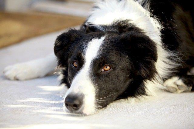 tráviace problémy psíkov a homeopati