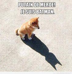 image drole batman Plus