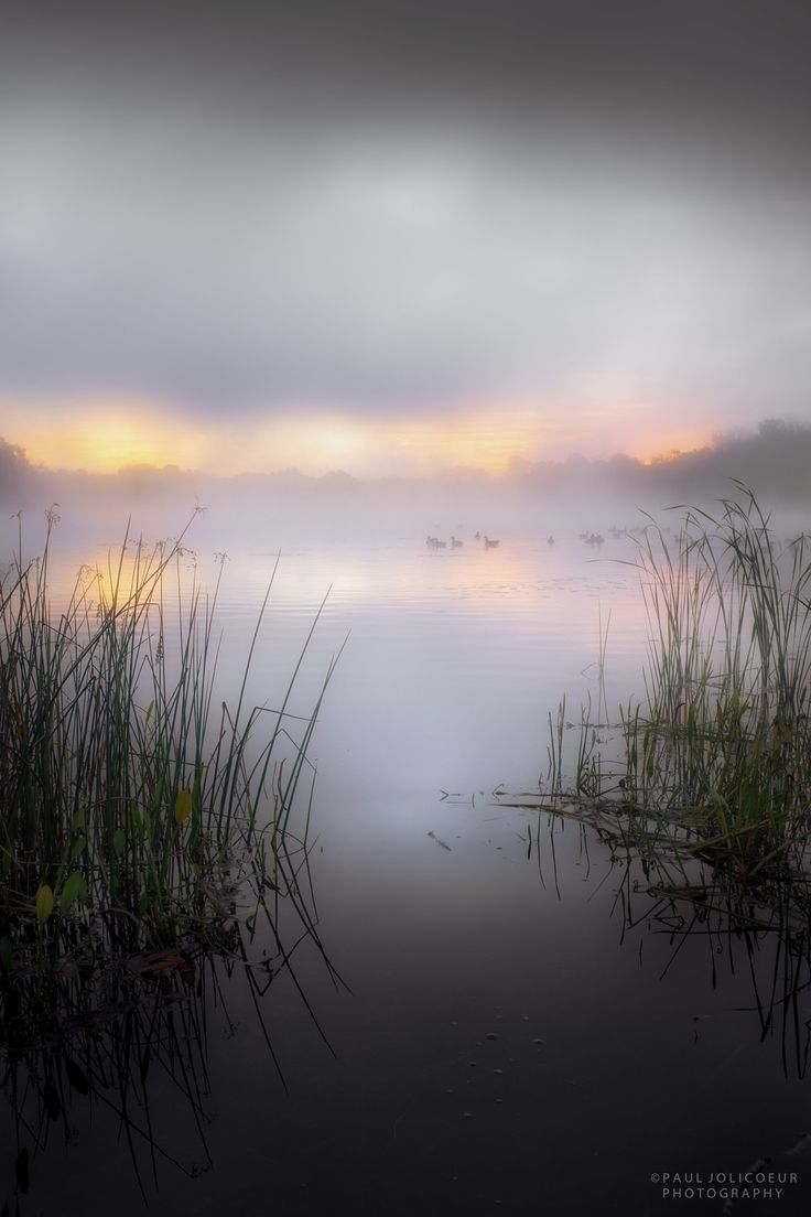 ~~Early Morning Swim | misty lake at dawn | by Paul Jolicoeur~~