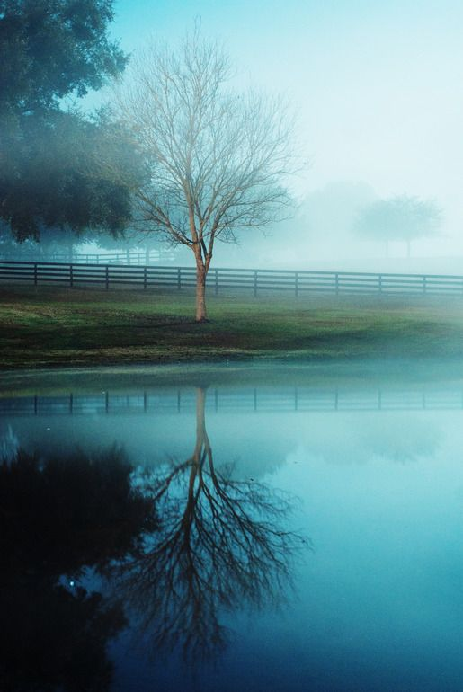"""Saatchi Online Artist: Christina Storozkova; C-Type, 2012, Photography """"Ocala Downs""""  I love that the fog comes frequently in the winter mornings only to be burned off by the sun. It's truly Ocala's signature weather!"""