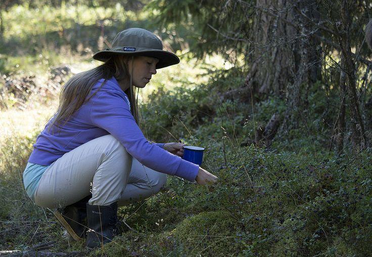 Ravanti Events, Picking Blueberries | by visitsouthcoastfinland #visitsouthcoastfinland #Finland #berries #marjat #outdoor #ravantievents