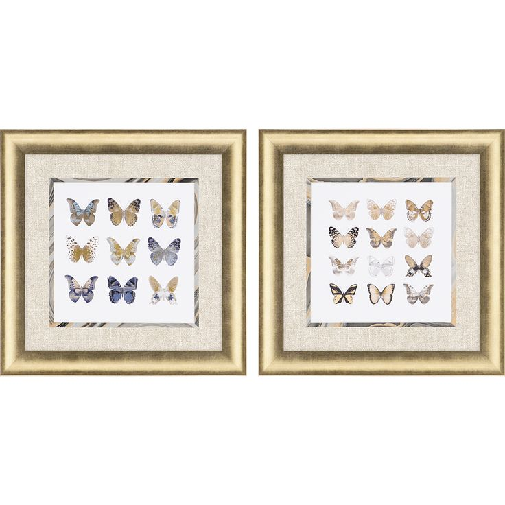 Paragon butterfly study framed wall art set of 2 4003