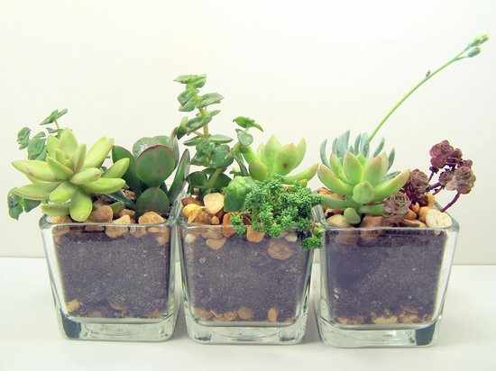 Terrarium Succulent Glass Planters Kit: This terrarium kit ($19) comes with one small glass planter, three succulents, soil, and rocks. Given its size, it's the perfect plant for a crowded desk.