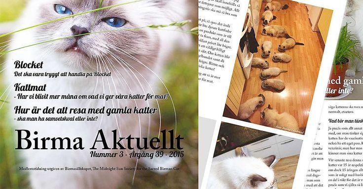 Finaste #minivaniljer #mazarin är omslagsflicka för Birma Aktuellt! My cuteface Mazzy is covergirl for Swedish Birman Society paper. #birma #birman #breeder #catsofinstagram #chokladochvanilj #kitten #neko #welovecats #we_love_cats #pinkalicious