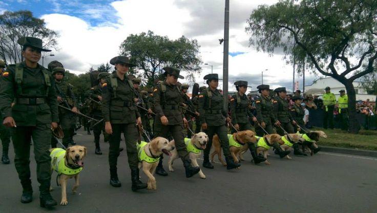 Dirección de Anti-narcóticos en compañía de sus leales amigos. #20DeJulio #SomosColombia