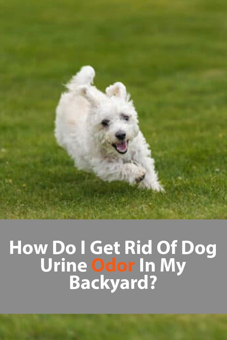 fae72a687e51c72bdac33c9334c5b590 - How To Get Rid Of Dogs From Your Yard