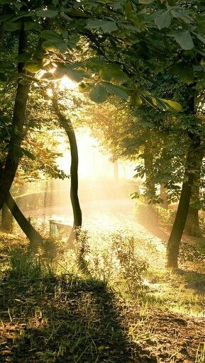 Los árboles, es una estructura naturales. :)