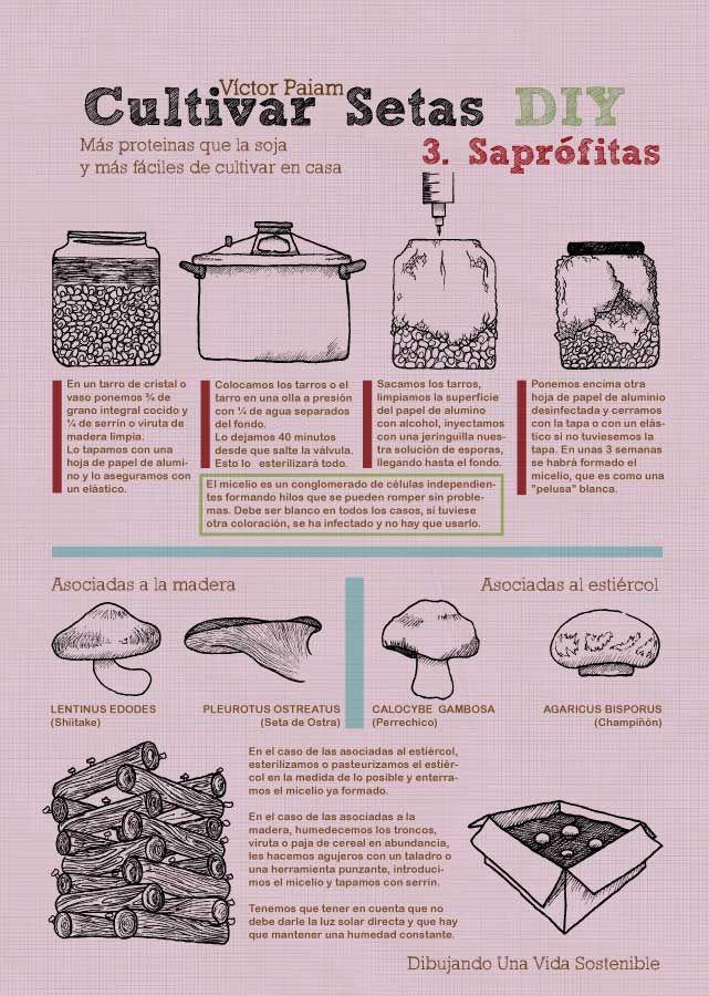 25 sch ne pilze z chten ideen auf pinterest pilze for Rankpflanzen wohnung