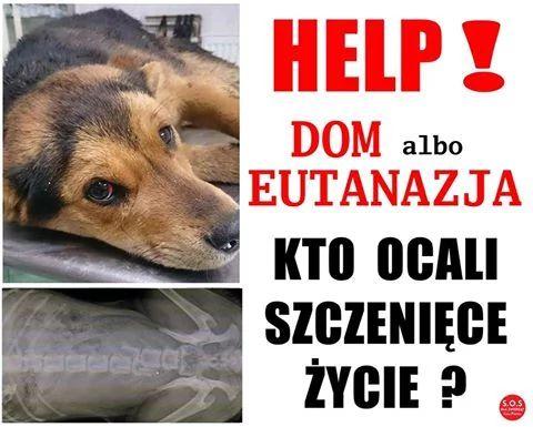 WIDMO ŚMIERCI NAD SZCZENIACZKIEM !!!  MA... - S O S - dla zwierząt - Cała Polska | Facebook