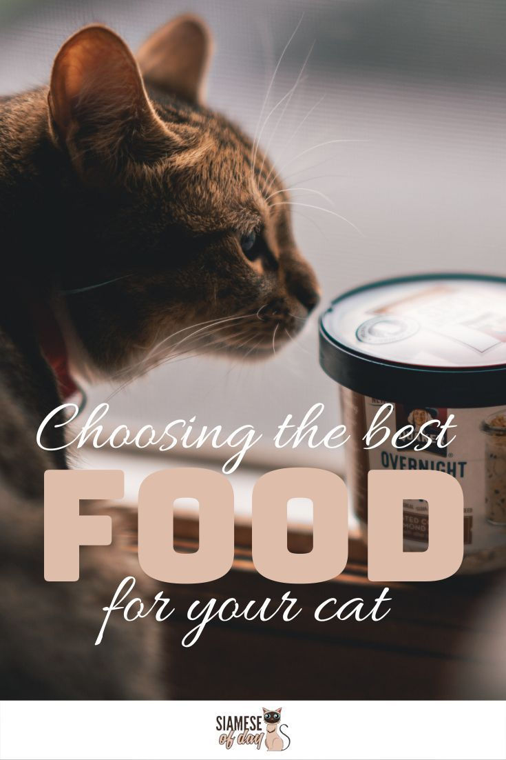 What Is The Best Diet For A Siamese Cat Best Diets Cats Kitten Care