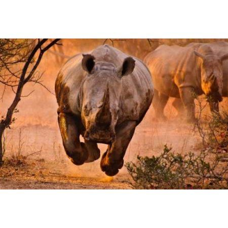 Rhino Learning To Fly Canvas Art - Justus Vermaak (20 x 28)