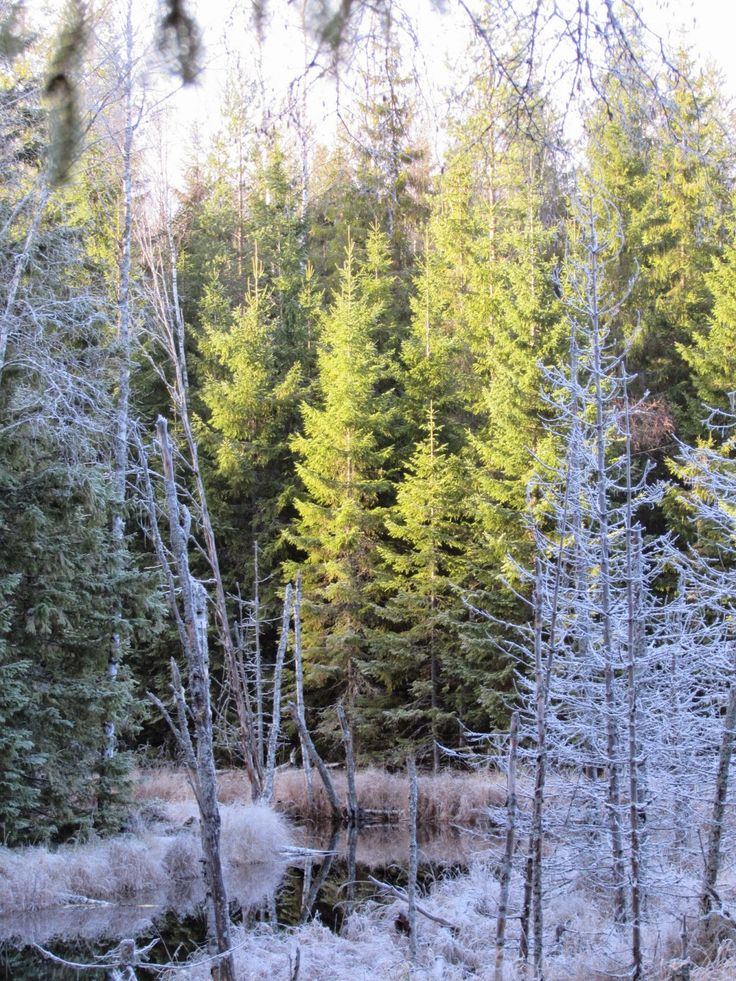 Winter is coming. Seitseminen National Park.