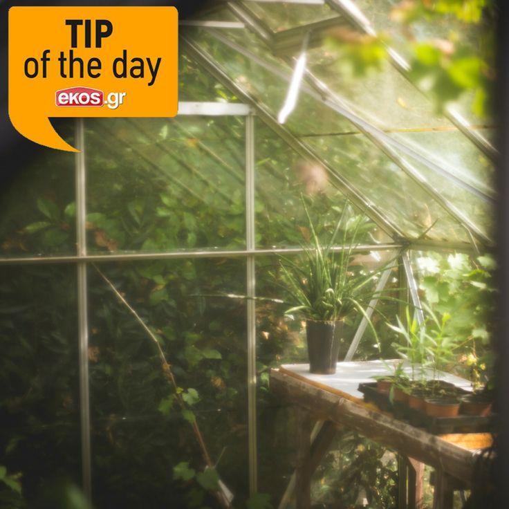#TipOfTheDay:  Έχεις κήπο και δεν ξέρεις ποιά φυτά χρειάζονται περισσότερο πότισμα; Μην ανησυχείς, γιατί σε γενικές γραμμές τα φυτά με γυαλιστερά και σκληρά φύλλα αντέχουν το νερό, ενώ τα κακτοειδή και παχύφυτα χρειάζονται ελάχιστο! #ekos #eshop #pou_panta_itheles #EveryKindOfSummer