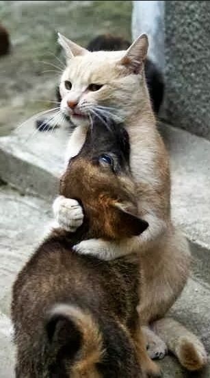 san diego cat breeders